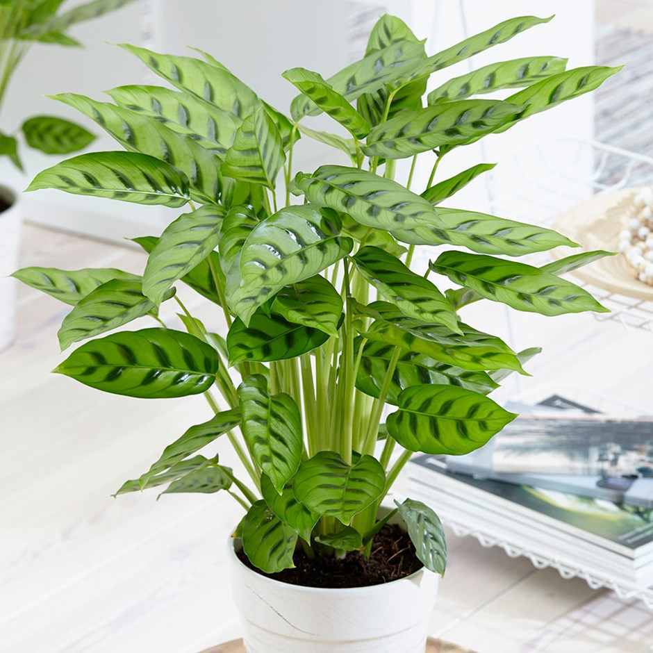 How To Look After Office Plants