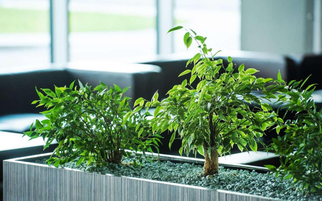 Office plants – the science of workplace greenery