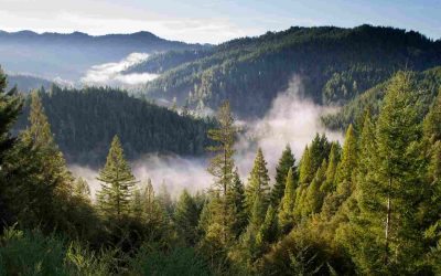 How your savings can help the environment