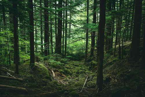 Net Zero Carbon: Forest image